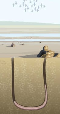 picture of mudflats