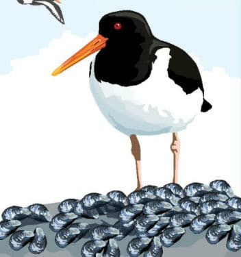 picture of a bird on a bed of mussels